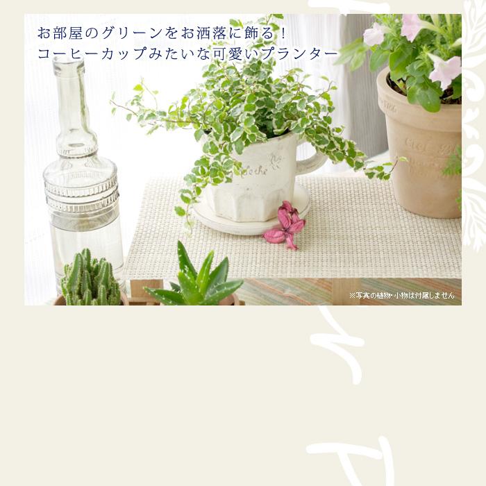 お部屋のグリーンをお洒落に飾る! コーヒーカップみたいな可愛いプランター(植木鉢)