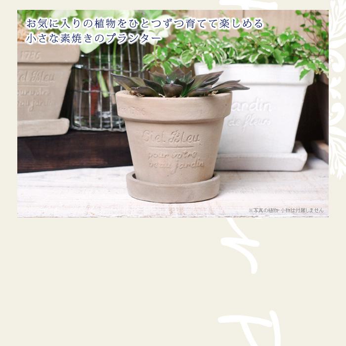 お気に入りの植物を一つずつ育てて楽しめる、小さな素焼きのプランター