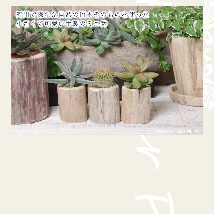 河川で採れた自然の流木そのものを使った、小さくて可愛い木製のミニ植木鉢