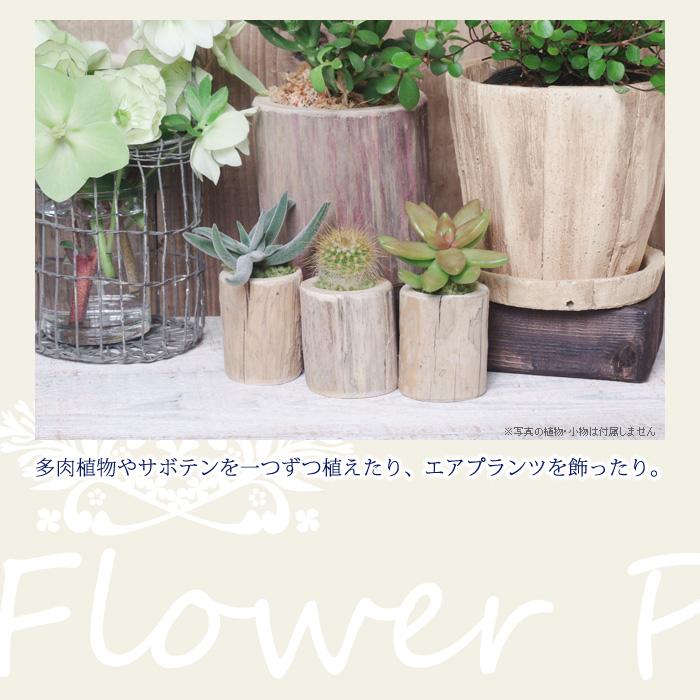 多肉植物やサボテンを一つずつ植えたり、エアプランツを飾ったり