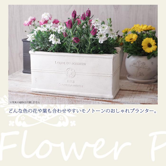 どんな色の花や葉も合わせやすいモノトーンのおしゃれプランター