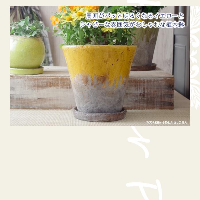 周囲がパッと明るくなるイエローとシャビーな雰囲気がおしゃれな植木鉢