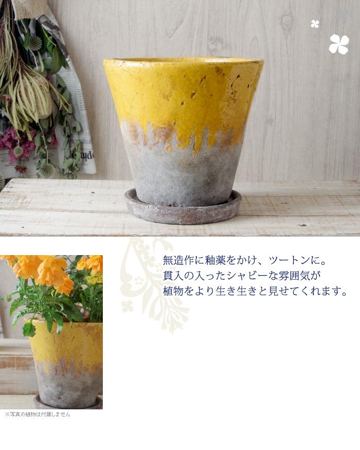 無造作に釉薬をかけ、ツートンに。貫入の入ったシャビーな雰囲気が植物をより生き生きと見せてくれます。