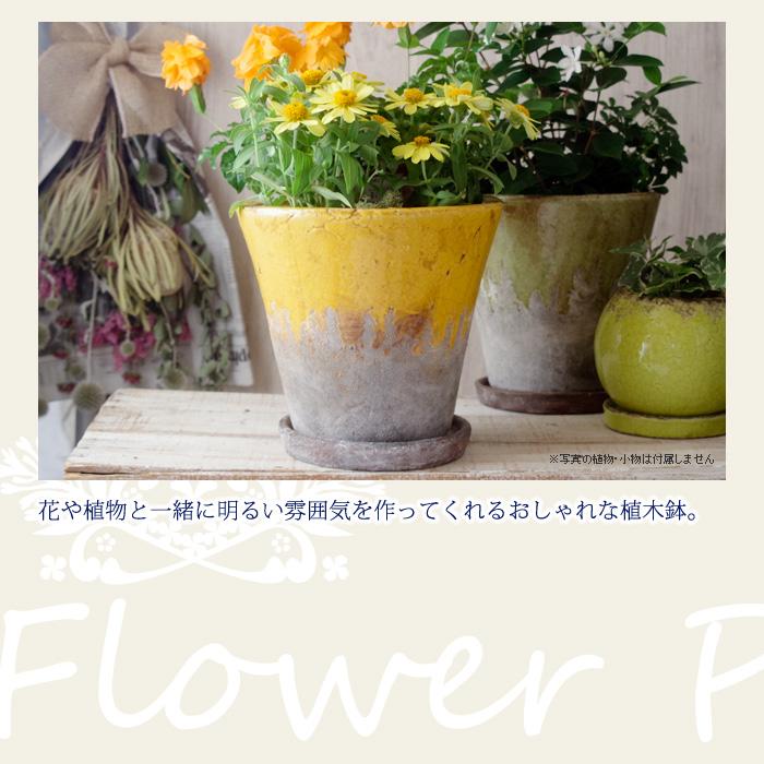 花や植物と一緒に明るい雰囲気を作ってくれるおしゃれな植木鉢