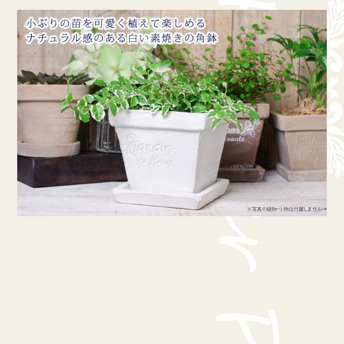 小ぶりの苗を可愛く植えて楽しめる、ナチュラル感のある白い素焼きの角鉢