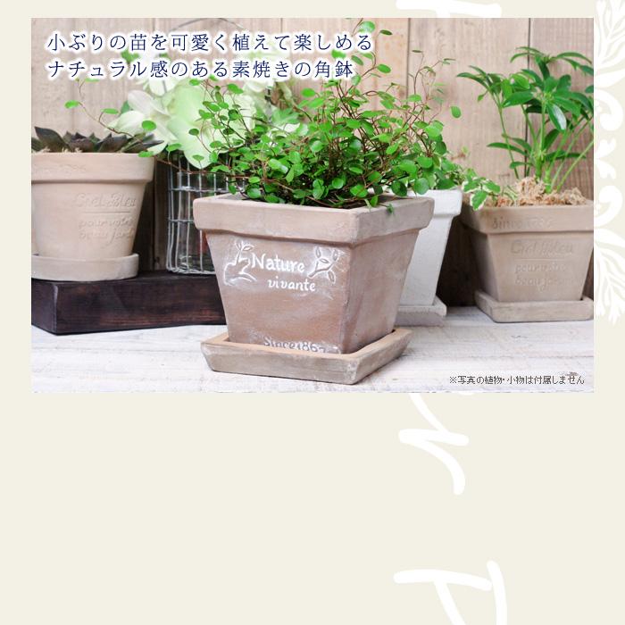 小ぶりの苗を可愛く植えて楽しめる、ナチュラル感のある素焼きの角鉢
