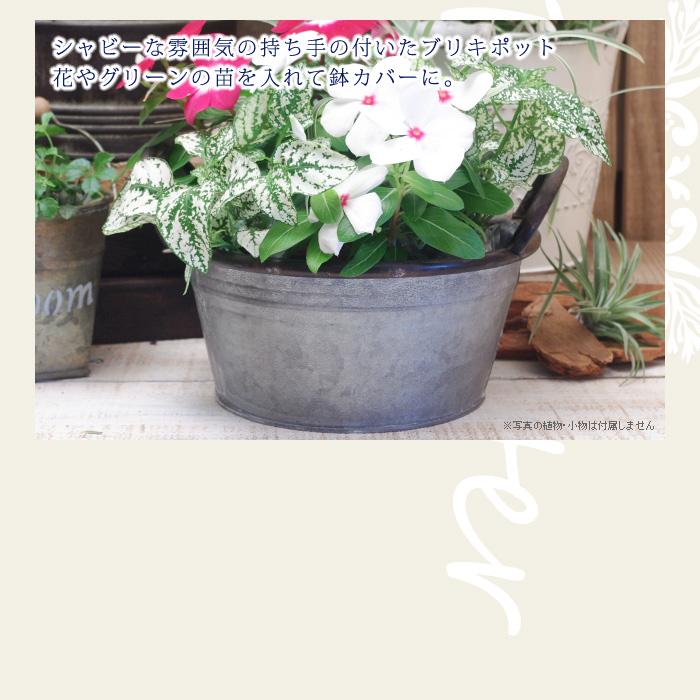シャビーな雰囲気の持ち手の付いたブリキポット。花やグリーンの苗を入れて鉢カバーに。