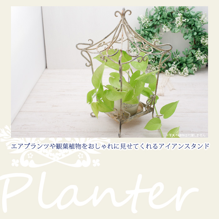 エアプランツや観葉植物をおしゃれに見せてくれるアイアンスタンド