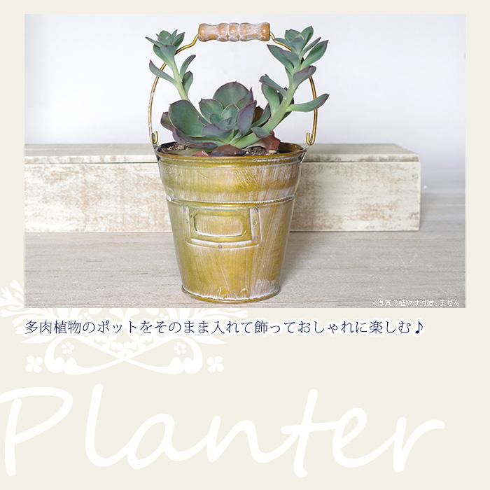 多肉植物のポットをそのまま入れて、飾っておしゃれに楽しむ♪