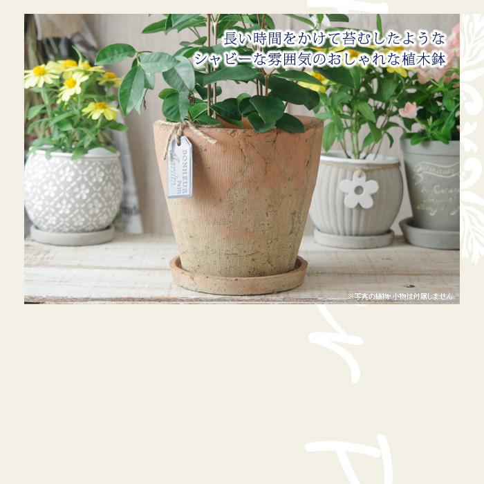 長い時間をかけて苔むしたようなシャビーな雰囲気のおしゃれな植木鉢