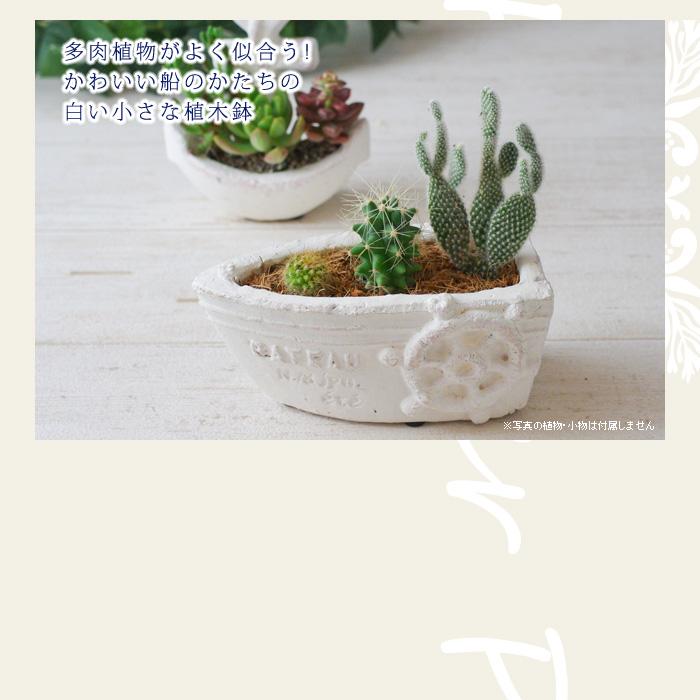 多肉植物がよく似合う!かわいい船のかたちの白い小さな植木鉢