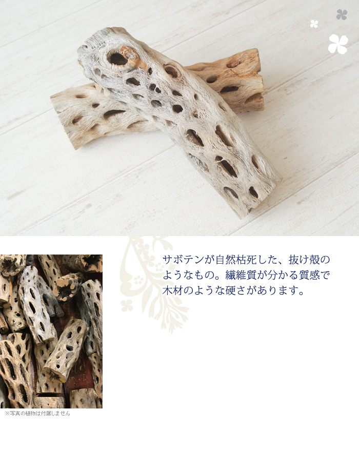 サボテンが自然枯死した抜け殻のようなもの。繊維質が分かる質感で、木材のような硬さがあります。