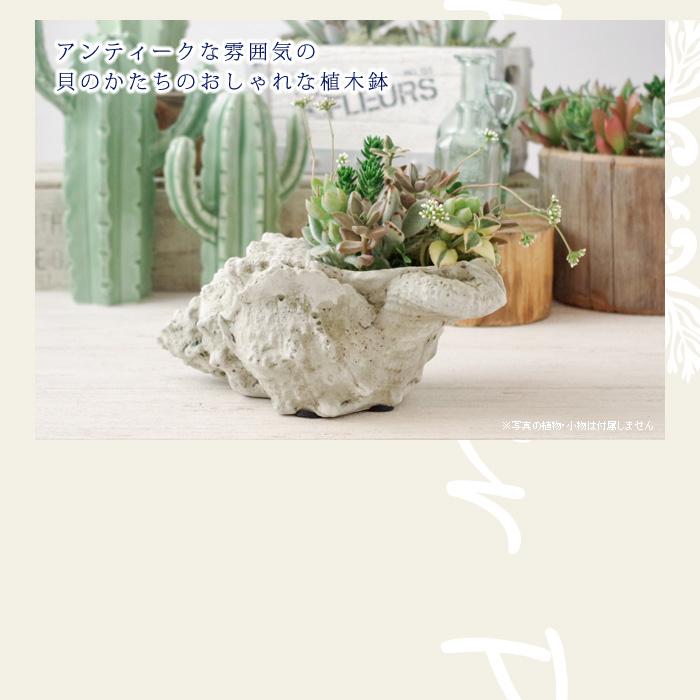 アンティークな雰囲気の貝のかたちのおしゃれな植木鉢