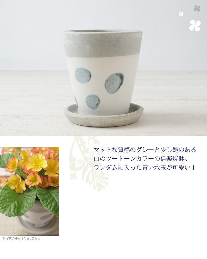 マットな質感のグレーと少し艶のある白のツートーンカラーの信楽焼鉢