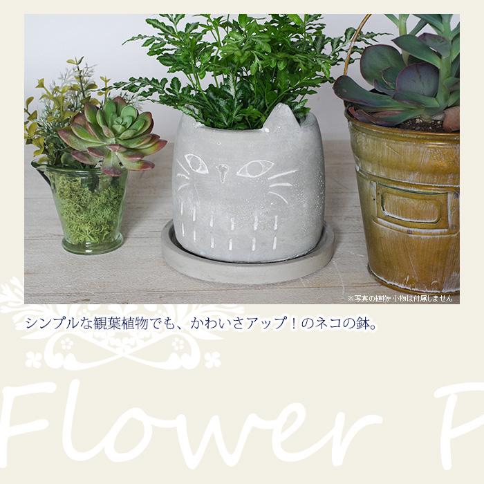 シンプルな観葉植物でもかわいさアップ!のネコの鉢
